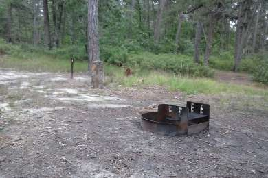 This is Campsite 1 at Lower Forge Campground. There is a fire ring. That's it.