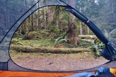 tentview forest lodging