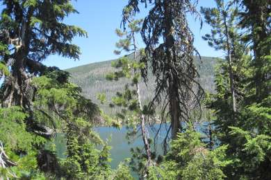 View of Olallie lake through what's left of the trees. Lots of beetle kill up there.