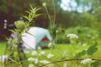 The campsites are comfortable and well maintained.