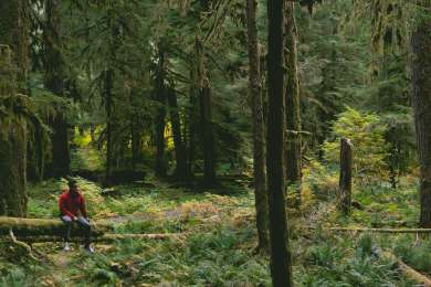 The campgrounds here are surrounded by lush, fairytale-like forests.