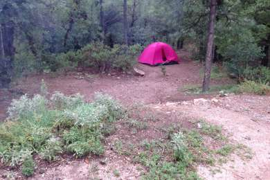 The little pink tent in the woods