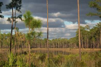 The lake at Long Pine Key Campground