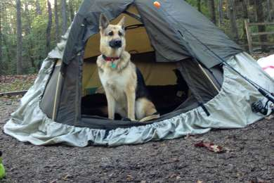 One of our 2 dogs enjoying the pet-friendly campgrounds.