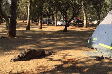 Upper Bayview Campground
