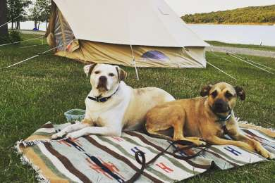 Camping with dogs!