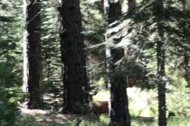 View of a deer from our campsite