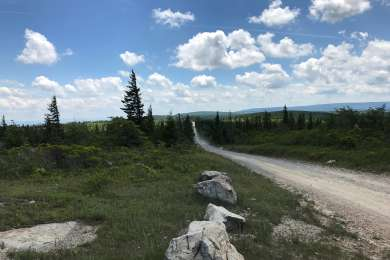 The long, gravel road into Dolly Sods.  The views & subalpine experience are worth the drive.