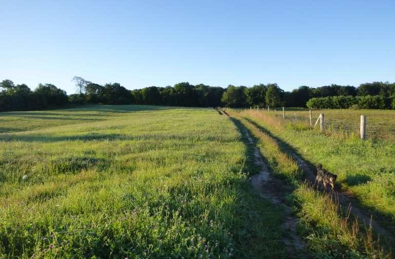 picturesque morning pasture...dog photobomb