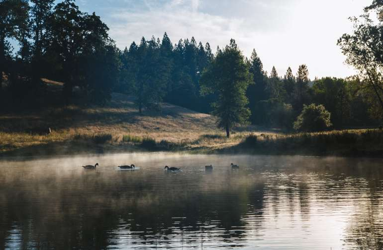 Early risers are rewarded with great light and magical mist across the pond.