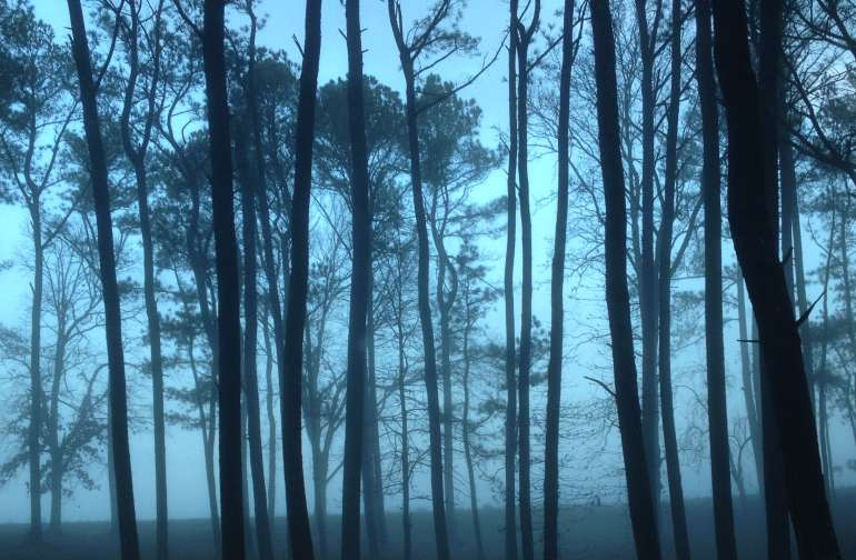 Morning mist in the pine grove, front of the property.