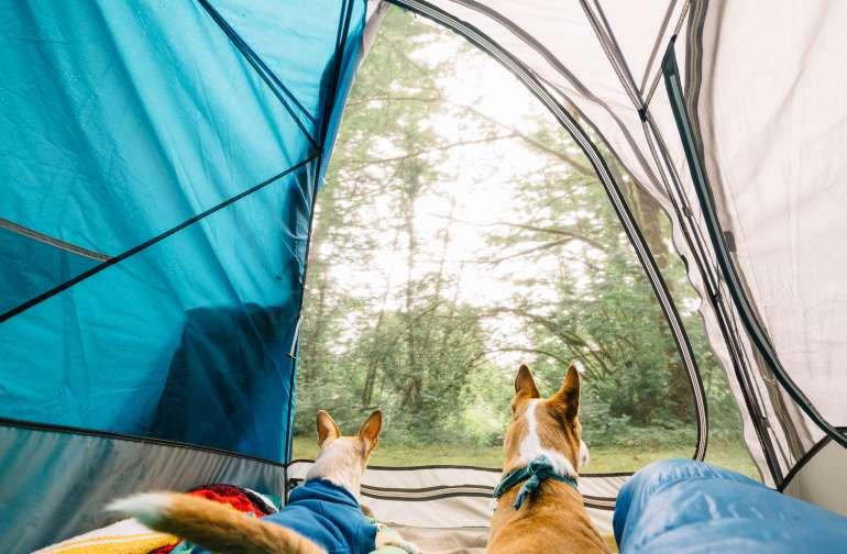 tentview animal lodging