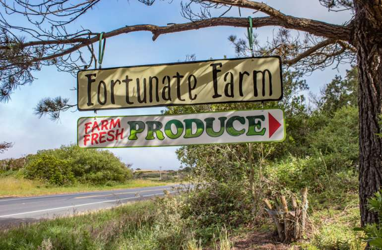 Look for our sign on the East side of Hwy One in Caspar! We have a farm stand which is open to the public on Saturdays and Monday evenings!