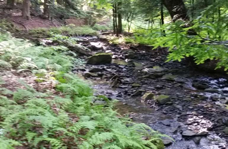 Stream in front of cabin. Runs all the way through property to Red Bank Creek.