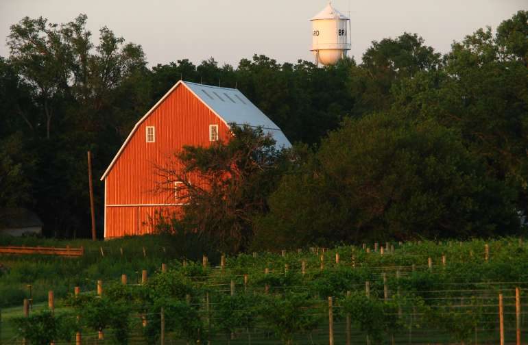 The view of the barn from the pasture, overlooking the vineyard.