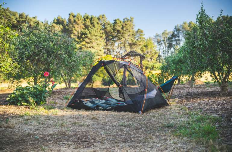 Tent set up among the Olive Trees at the Olive Grove campsite.