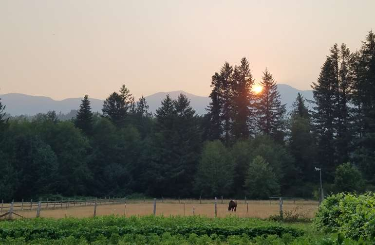 Sunset on juniper hills