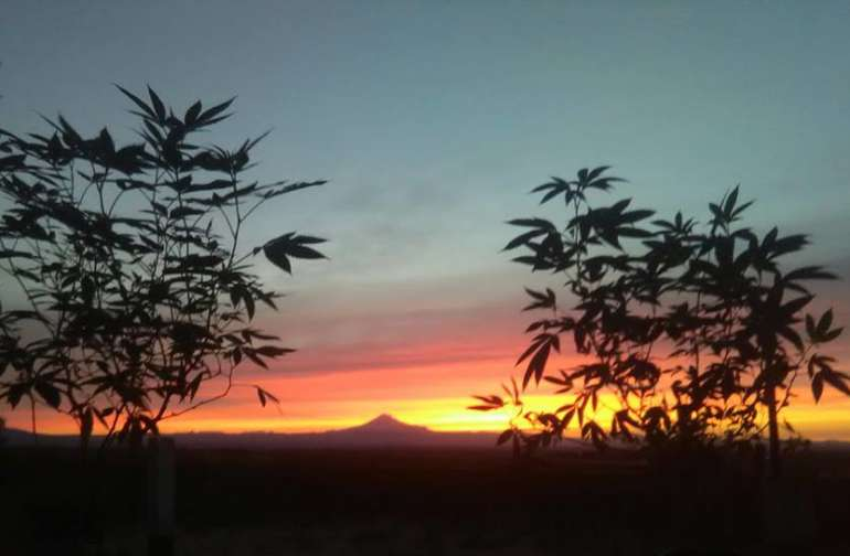 Sunset from our Cannabis garden that is on site and open for viewing to all campers!! :-)