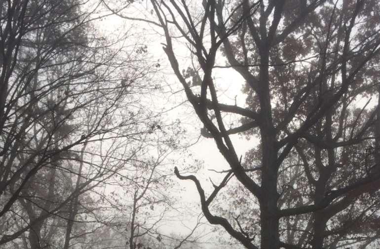 Crows Crest