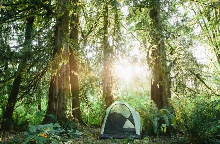 The tall, beautiful cedars provided a a stunning canopy.