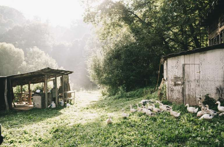 Beautifully lit morning by the drying shed