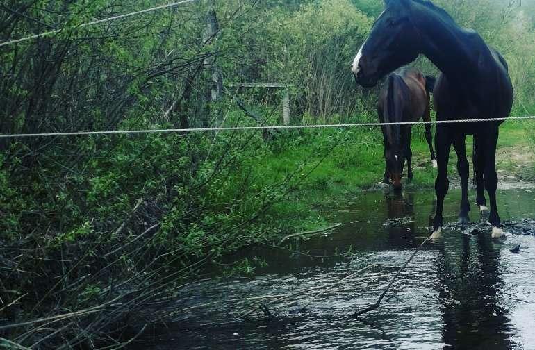 Happy Horses enjoying the Pasture at Caballine