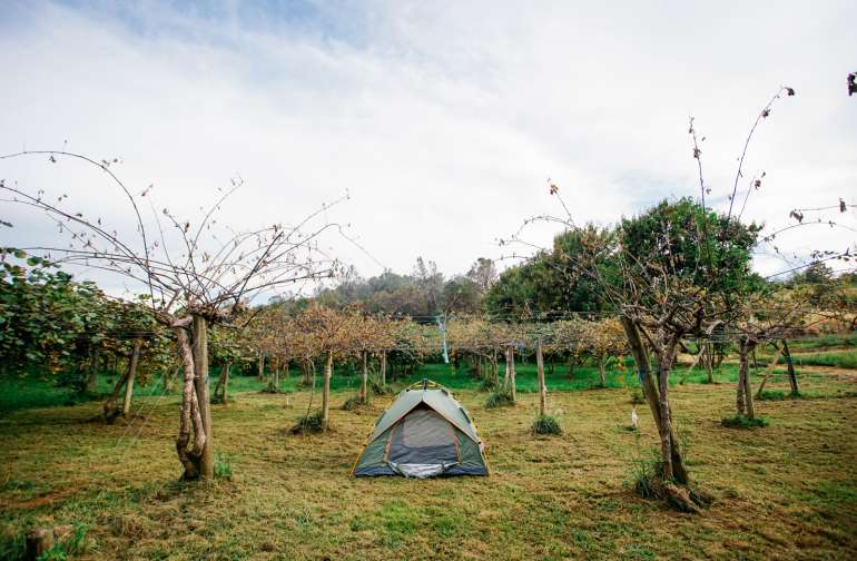 Sleep right under kiwi trees