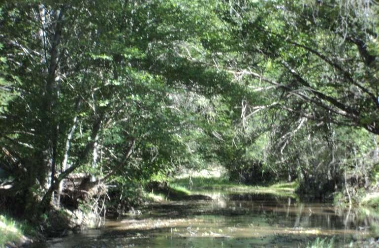 Negrito Creek