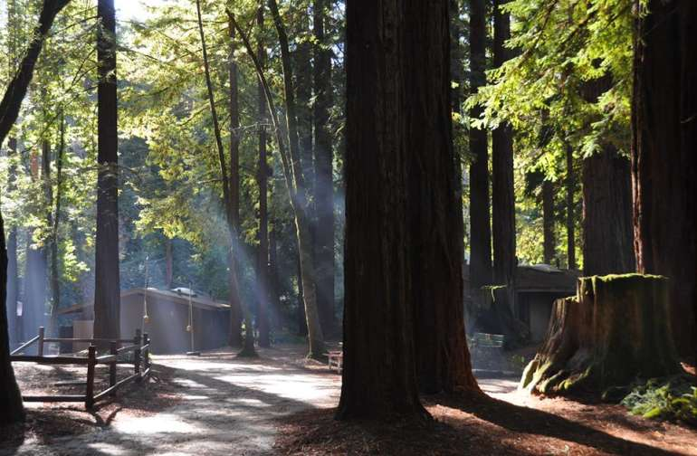 Beautiful Redwoods setting with cabins and tent sites.