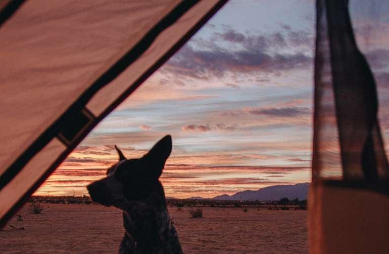 tentview dog animal