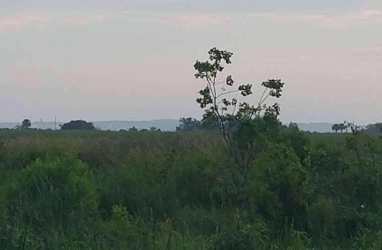Weeks Island in distant background taken from Vermilion Bay Escape porperty.