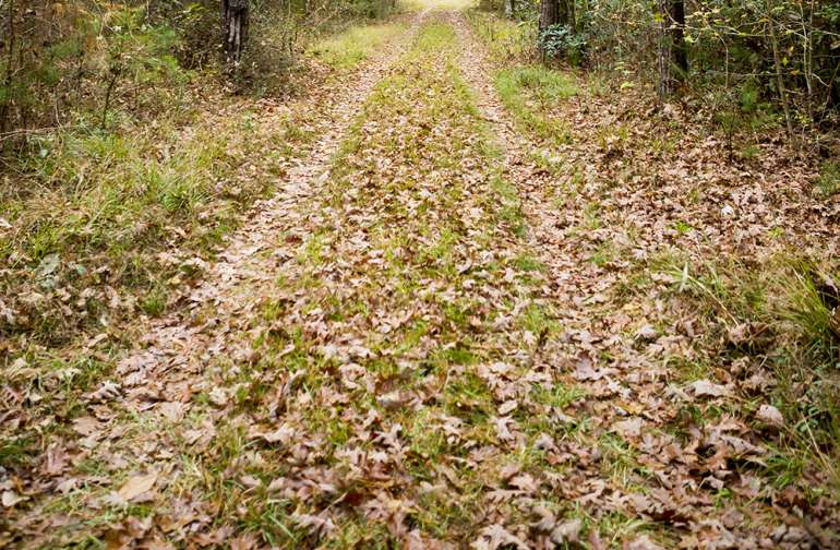 The Nature Trail that takes you to the Back Country sites