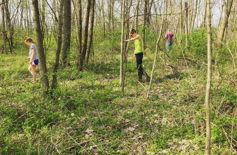 Our land has 20 acres of wooded land to explore and forage through!