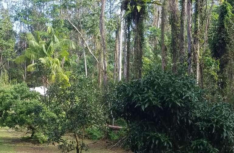 Nanawale Forest Reserve
