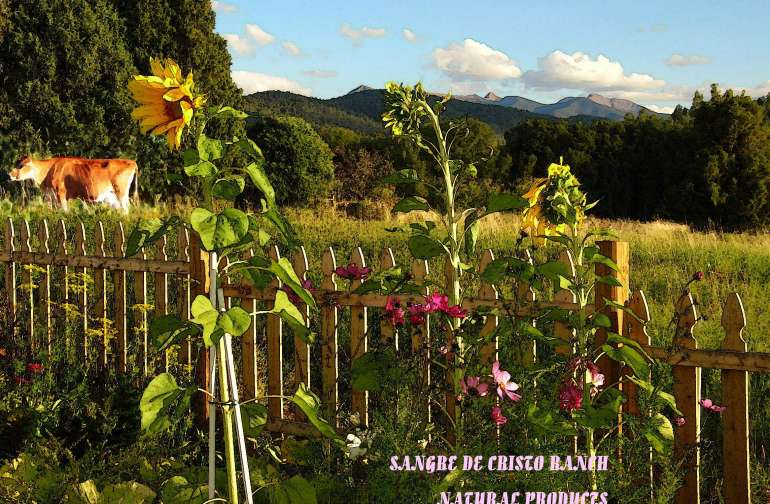 Our Sangre de Cristo Ranch: Agape Gardens-- Organic fruits vegetable and medicinal herbs, Green House of Prayer, and River Camping Retreats.