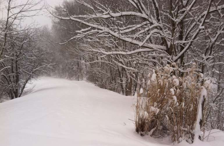 Winter on the North Bend Rail Trail