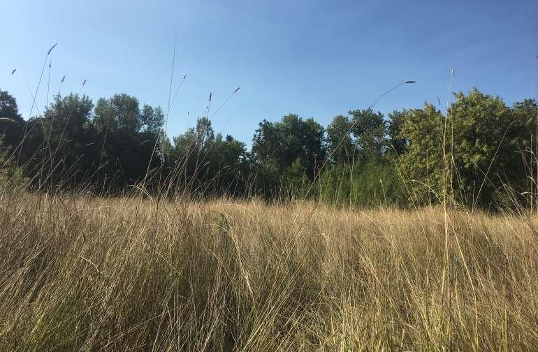 Moss & Fern Meadows