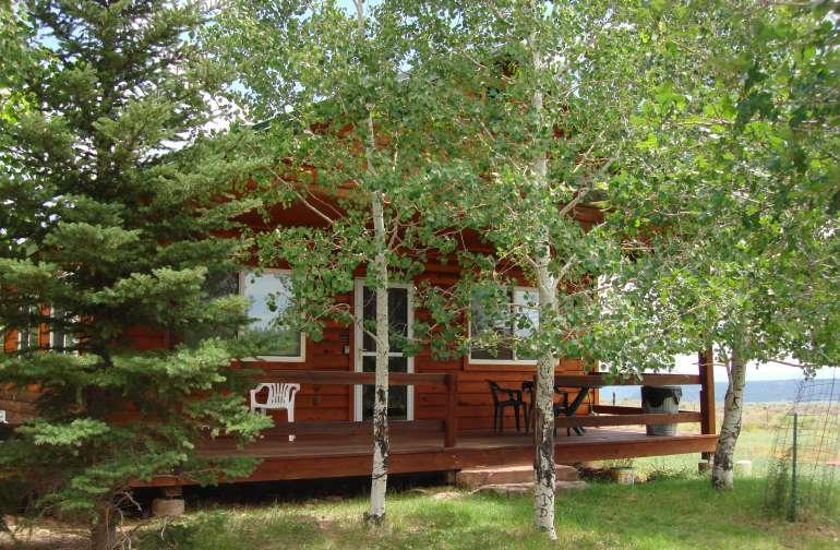 Aspen Cove trees