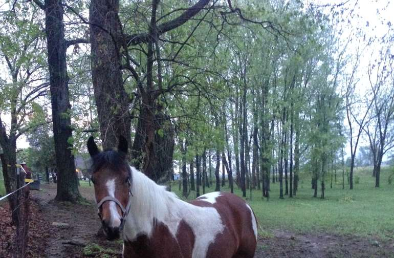 Behind this horse, in the wooded area, are more spots to camp.