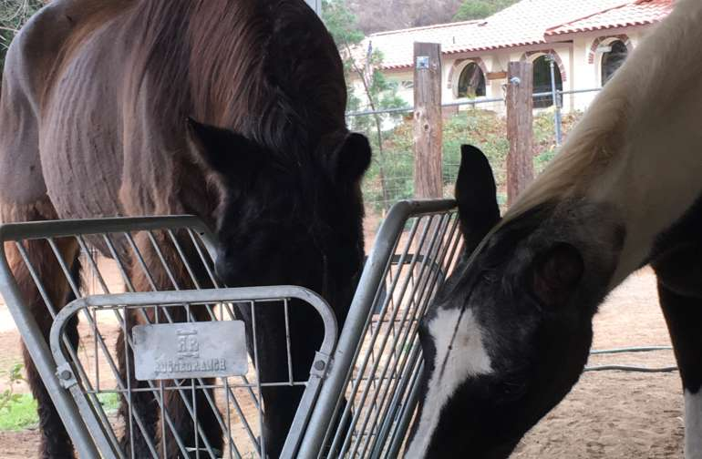 2 The Rescue Animal Sanctuary Camping