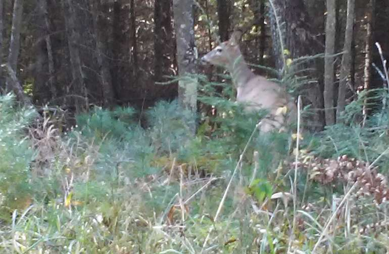 Deer siting onsite