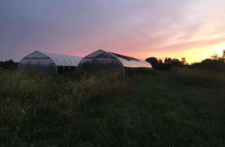 The high tunnels on the hill allow for an extended growing season for us.
