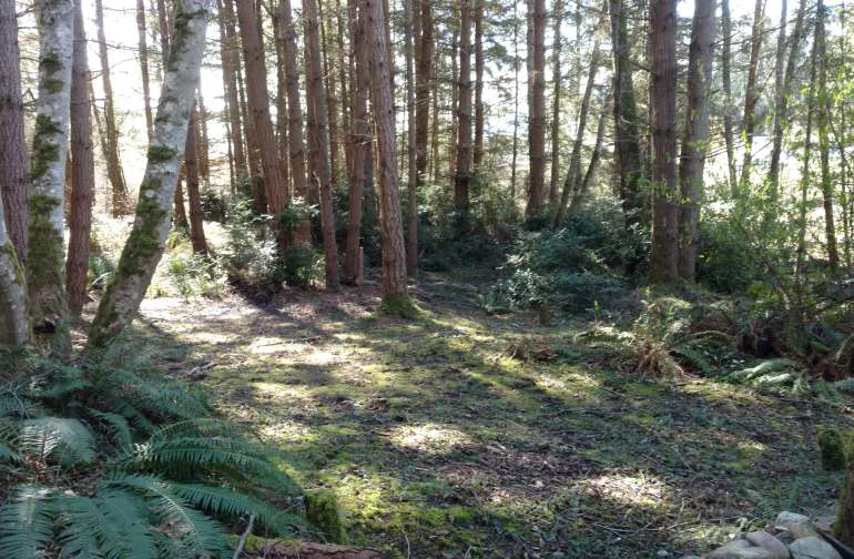 While this is the main campsite, there are a few other clearings on the property you can choose as well.