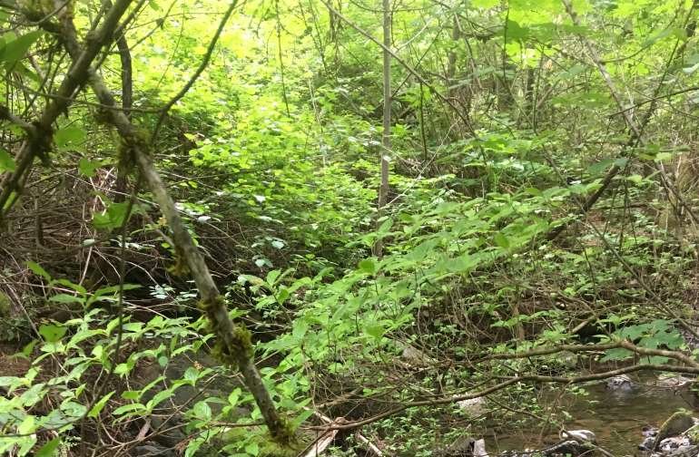 As this property is at the top of the water shed, there are small creeks in every direction.