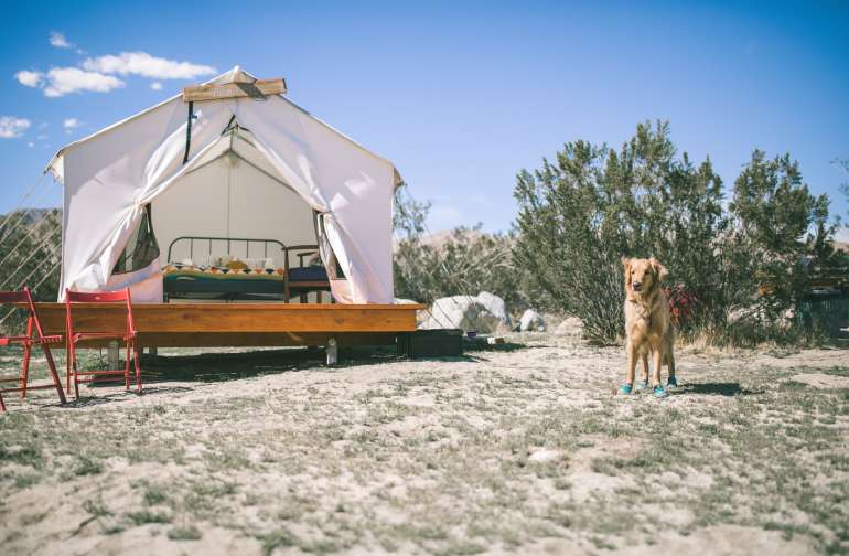 Amazing glamping tent!