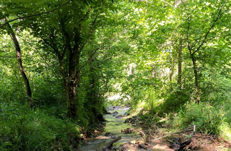 250 Acres Remote Forest w/ Trails