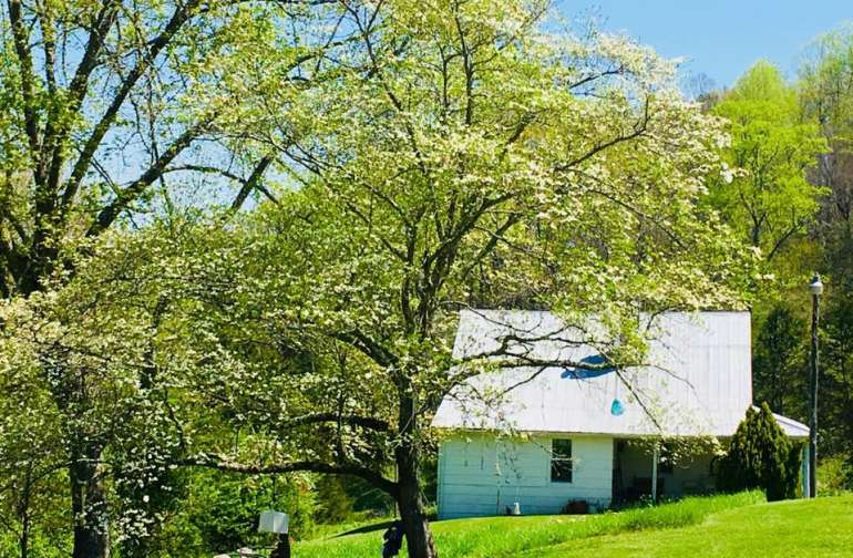 This is the Blessing Tree, a mature dogwood, in blossom as I write this. You will be blessed if you stay here!