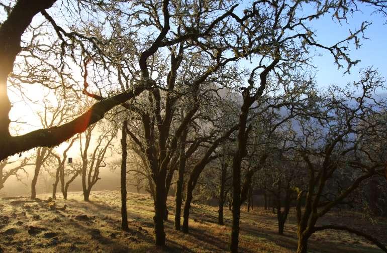 Oak savannah ecosystem. At 1400 feet we're often above the morning valley fog.