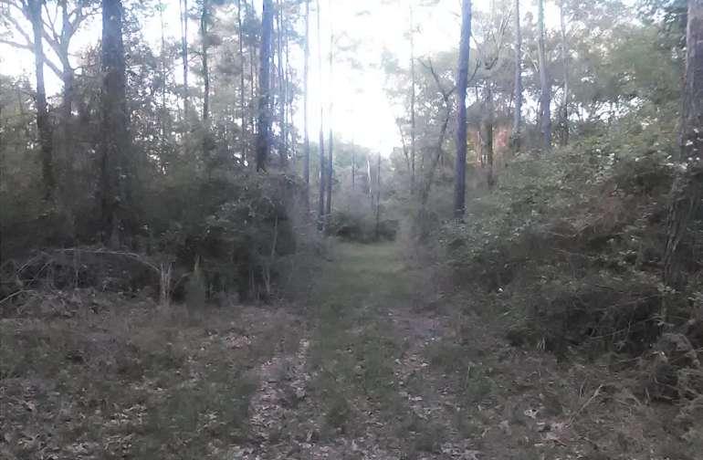 The lane to Oak Grove Campsite