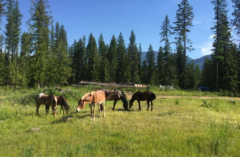 Our horses enjoying the summertime grass. You can enjoy views of our horses from your campsite.